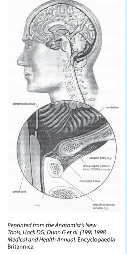 Suboccipitals 6