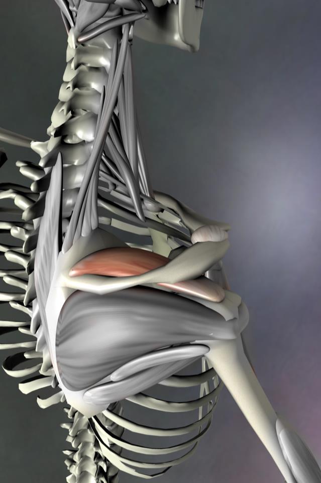 shoulder workout   Adjust2it\'s Blog